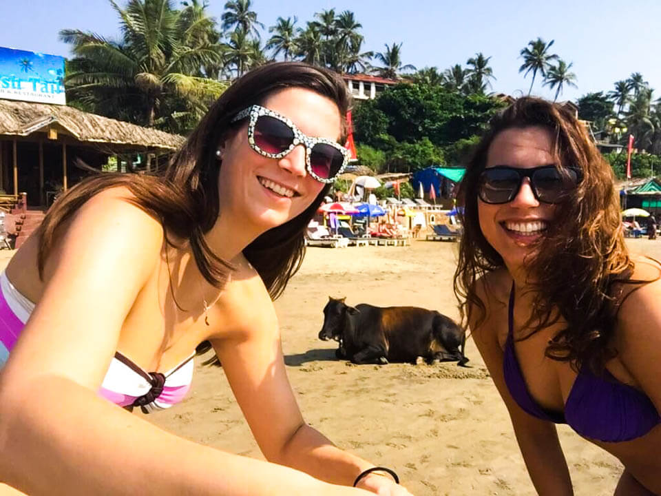 Cow-Selfie-at-the-beach