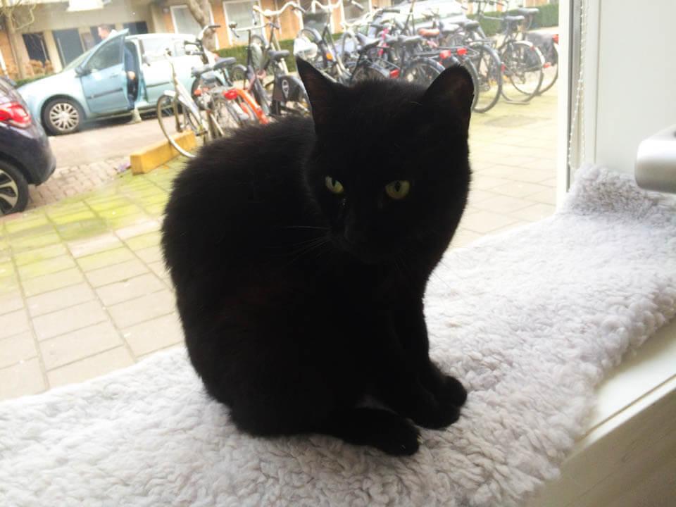 Katten_Kopjes