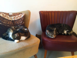Sleeping_cats_Amsterdam