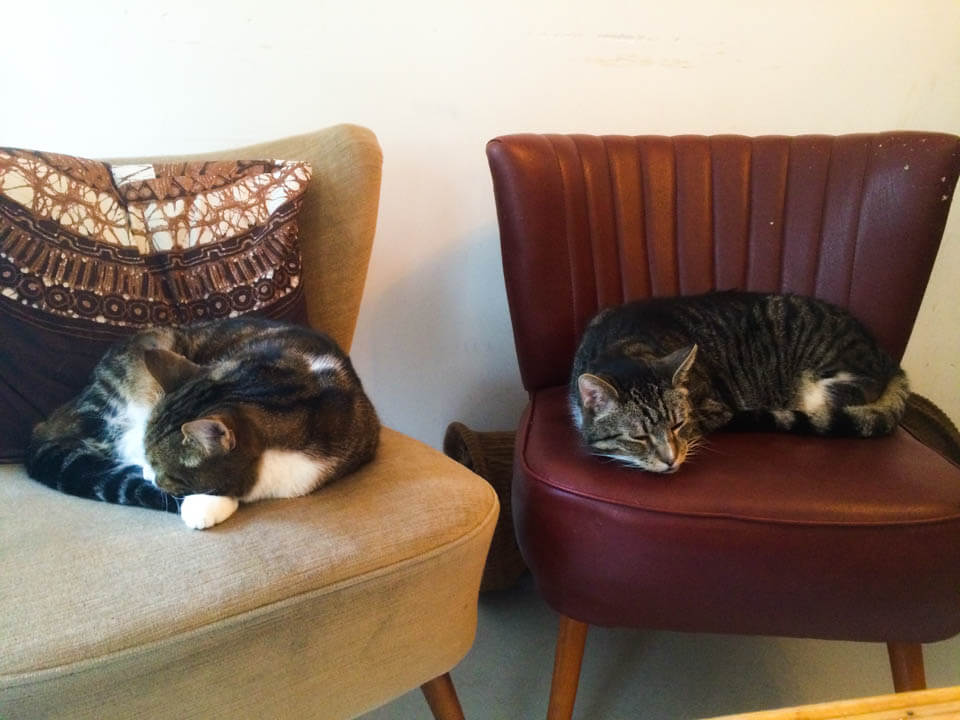 Sleeping_cats_Amsterdam