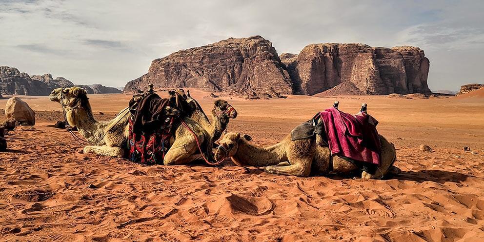 Camels_In_Wadi_Rum_Jordan