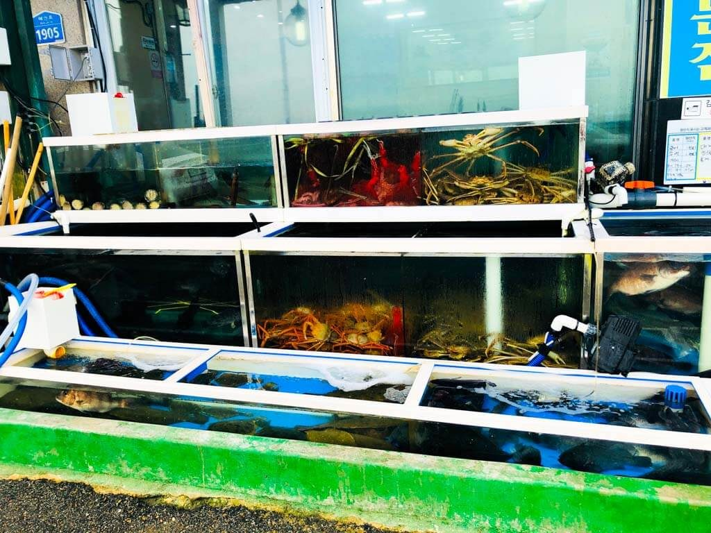 fish restaurants in Jimunjin Southkorea