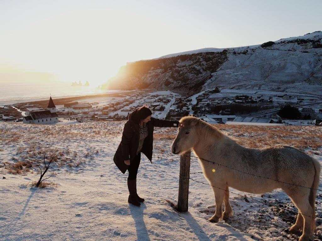 Icelandic-Horse-in-Vík-í-Mýrdal