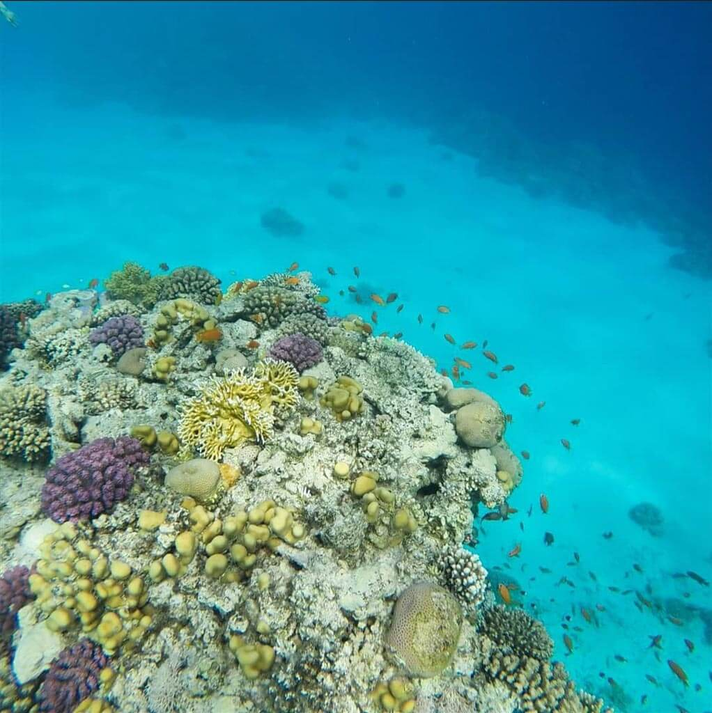 diving-and-snorkeling-in-Egypt